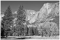 Aspens, pine trees, and Yosemite Falls wall in autum. Yosemite National Park, California, USA. (black and white)