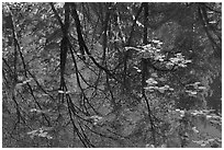 Reflections of cliffs and trees in creek. Yosemite National Park, California, USA. (black and white)
