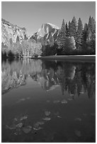 Fallen leaves, Merced River, and Half-Dome reflections. Yosemite National Park ( black and white)
