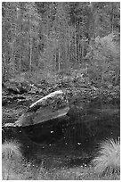 Boulder and reflections in  Merced River in autumn. Yosemite National Park ( black and white)