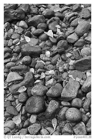 Pebbles and fallen leaves. Yosemite National Park (black and white)
