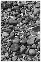 Pebbles and fallen leaves. Yosemite National Park, California, USA. (black and white)