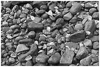 Autumn leaves and pebbles. Yosemite National Park, California, USA. (black and white)