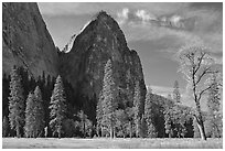 El Capitan Meadow and Cathedral Rocks in autumn. Yosemite National Park ( black and white)