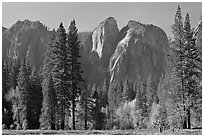Cathedral Rocks seen from Sentinel Meadow. Yosemite National Park, California, USA. (black and white)