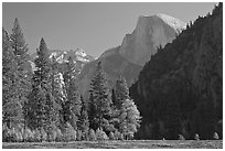 Half-Dome seen from Sentinel Meadow. Yosemite National Park, California, USA. (black and white)