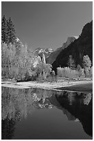 Trees in autum foliage, Half-Dome, and cliff reflected in Merced River. Yosemite National Park, California, USA. (black and white)