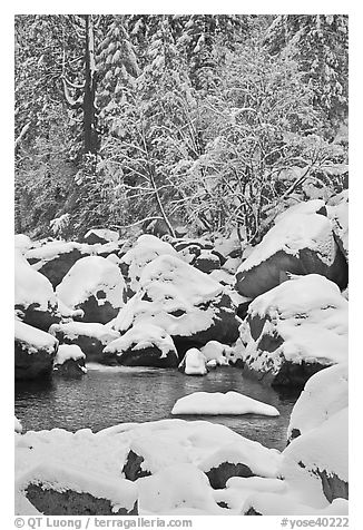 Snow-covered boulders in Merced River and trees. Yosemite National Park (black and white)