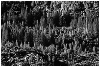 Trees and rocks, Hetch Hetchy Valley. Yosemite National Park ( black and white)