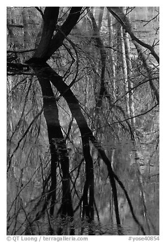 Willows reflected in Merced River. Yosemite National Park (black and white)