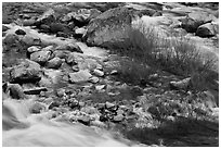 Rapids and shrubs, early spring, Lower Merced Canyon. Yosemite National Park, California, USA. (black and white)