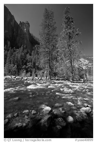 Rostrum, tall trees, and Merced River. Yosemite National Park (black and white)