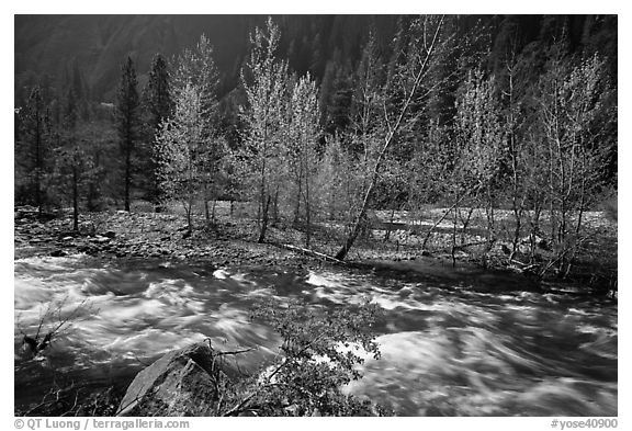 Newly leafed trees on island and Merced River, Lower Merced Canyon. Yosemite National Park (black and white)