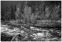 Newly leafed trees on island and Merced River, Lower Merced Canyon. Yosemite National Park ( black and white)