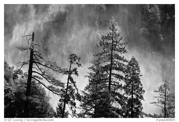 Trees and mist from Bridalveil falls. Yosemite National Park (black and white)