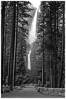 Path leading to Yosemite Falls framed by tall pine trees. Yosemite National Park, California, USA. (black and white)