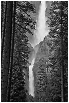 Upper and Lower Yosemite Falls framed by pine trees. Yosemite National Park ( black and white)