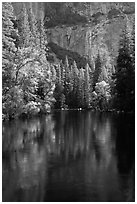 Trees reflected in river at the base of El Capitan in spring. Yosemite National Park ( black and white)