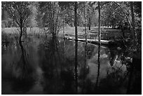 Trees reflected in Merced River run-off in the spring. Yosemite National Park ( black and white)