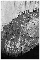 Pine trees on ridges and Half-Dome face. Yosemite National Park ( black and white)