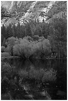 Refections and green trees, Mirror Lake. Yosemite National Park ( black and white)