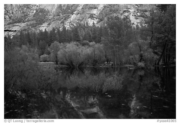 Willows, cliffs, and reflections, Mirror Lake. Yosemite National Park (black and white)