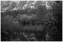 Willows, cliffs, and reflections, Mirror Lake. Yosemite National Park ( black and white)
