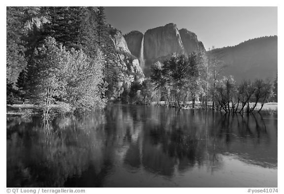 Trees in spring foliage and Yosemite Falls reflected in Merced River. Yosemite National Park (black and white)