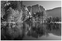 Trees in spring foliage and Yosemite Falls reflected in Merced River. Yosemite National Park ( black and white)