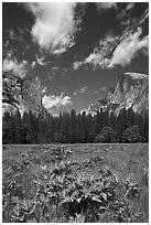 Meadow, Washington Column, and Half-Dome. Yosemite National Park, California, USA. (black and white)