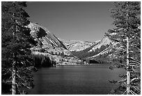 Tenaya Lake and Medlicott Dome framed by trees. Yosemite National Park ( black and white)