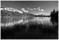 Willows and snowy peaks reflected in Tenaya Lake. Yosemite National Park ( black and white)