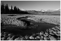 Meandering stream and grasses, early spring, Tuolumne Meadows. Yosemite National Park, California, USA. (black and white)