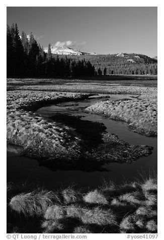 Grasses and stream, late afternoon, Tuolumne Meadows. Yosemite National Park (black and white)