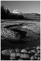 Grasses and stream, late afternoon, Tuolumne Meadows. Yosemite National Park ( black and white)
