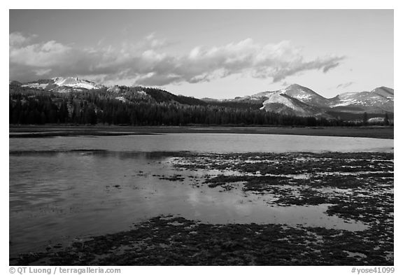 Flooded meadow in early spring at sunset, Tuolumne Meadows. Yosemite National Park (black and white)