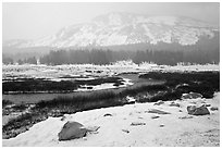 Snowy landscape near Tioga Pass. Yosemite National Park, California, USA. (black and white)