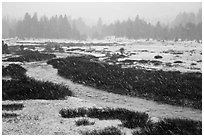 Falling snow streaks, river and meadow. Yosemite National Park, California, USA. (black and white)