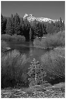 Willows, fresh snow,  and Cathedral Peak. Yosemite National Park, California, USA. (black and white)