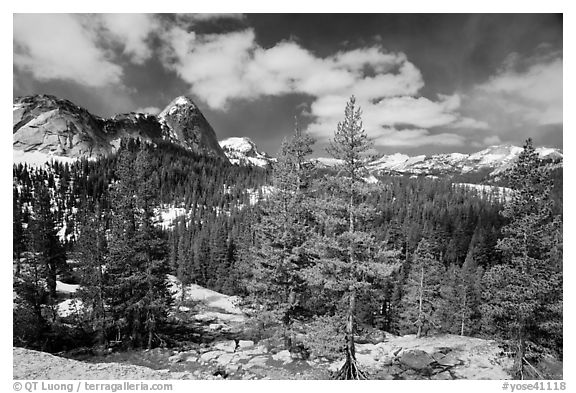 Pine trees in spring and Fairview Dome, Tuolumne Meadows. Yosemite National Park (black and white)