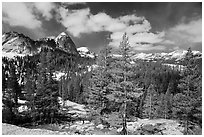 Pine trees in spring and Fairview Dome, Tuolumne Meadows. Yosemite National Park, California, USA. (black and white)
