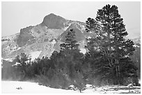 Trees and peak with fresh snow, Tioga Pass. Yosemite National Park, California, USA. (black and white)