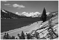 Road on shore of Tenaya Lake. Yosemite National Park, California, USA. (black and white)