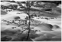 Branches and river, Happy Isles. Yosemite National Park, California, USA. (black and white)
