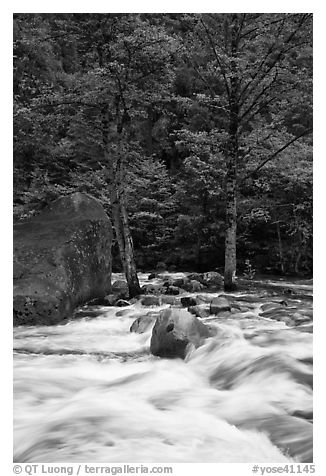 Merced River cascades, boulder, and trees, Happy Isles. Yosemite National Park (black and white)