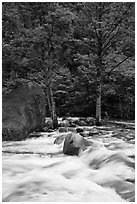 Merced River cascades, boulder, and trees, Happy Isles. Yosemite National Park, California, USA. (black and white)