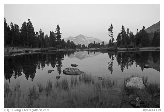 Alpine tarn near Tioga Pass and reflections at sunset. Yosemite National Park (black and white)