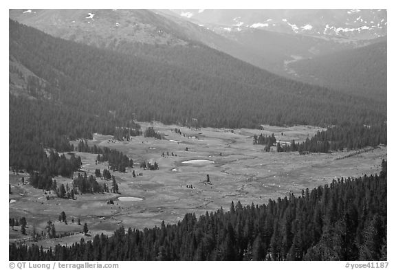 Dana Meadows seen from above, early summer. Yosemite National Park (black and white)