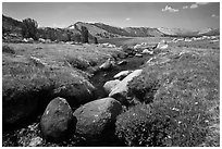 Alpine scenery with stream and distant Gaylor Lake. Yosemite National Park ( black and white)