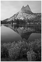 Lupine, Cathedral Peak, and reflection. Yosemite National Park, California, USA. (black and white)